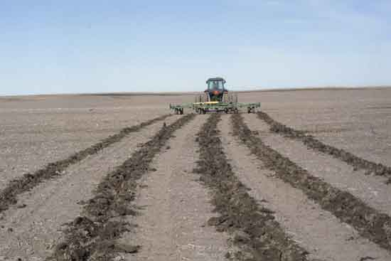 Emergency Tillage